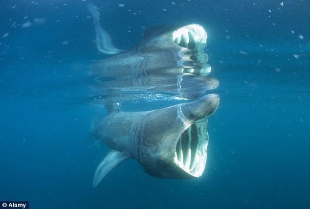 """游人拯救搁浅""""海豚"""" 走近发现是鲨鱼"""