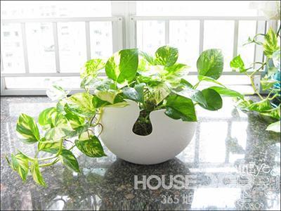 卧室适合放什么植物 8款卧室绿植为你推荐