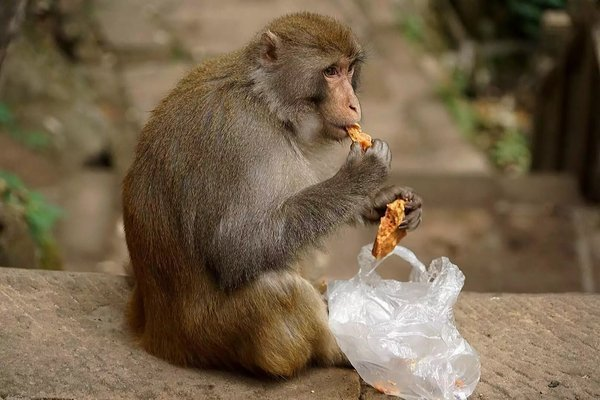 猴子是什么原因_有一只黄色的猴子,有一个动作是蒙住眼睛的,这是什么美图软件?