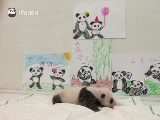 画风可爱竹林熊猫背景