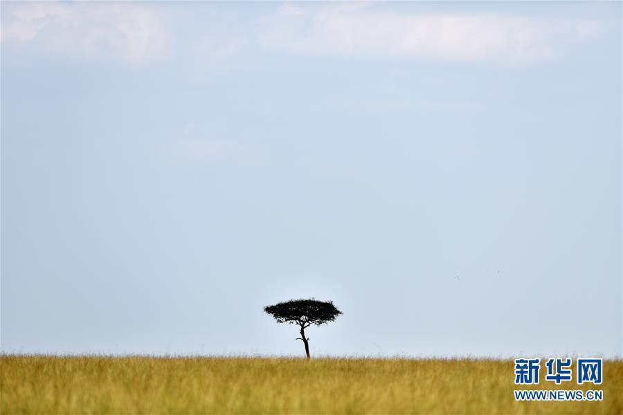 东非草原故事 人与动物和谐相处